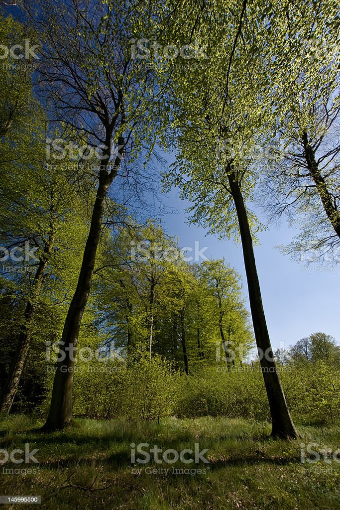 Spring in the forrest royalty-free stock photo