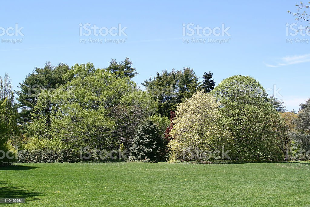 Spring in the Garden royalty-free stock photo