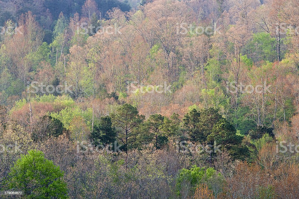 Spring in the Great Smoky Mountains. stock photo