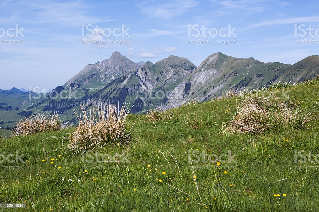 Spring in the mountain royalty-free stock photo