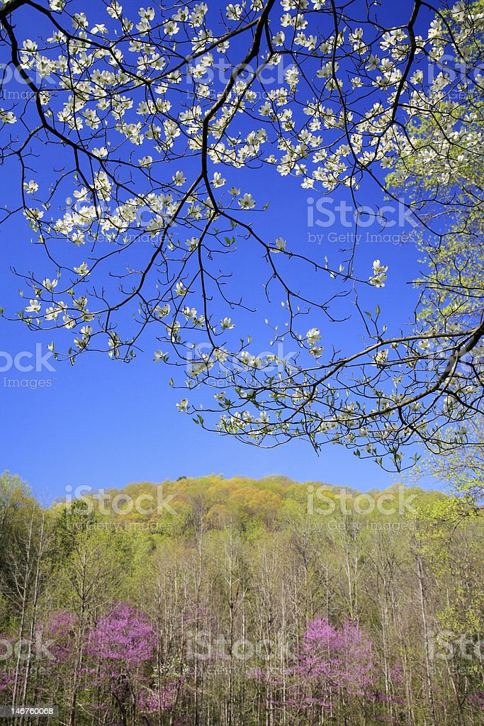 spring in the mountains royalty-free stock photo