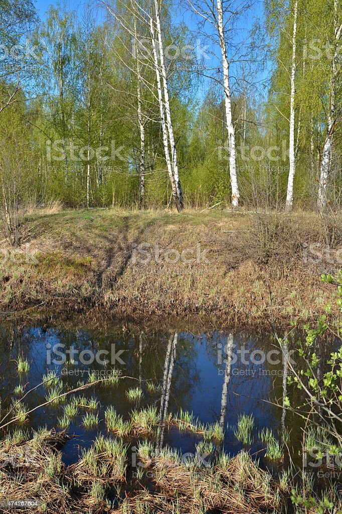 Spring in the national Park. stock photo