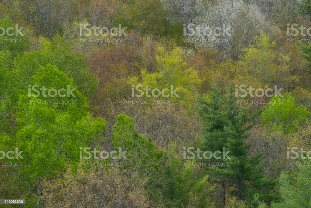 Spring in the Northern Forest stock photo