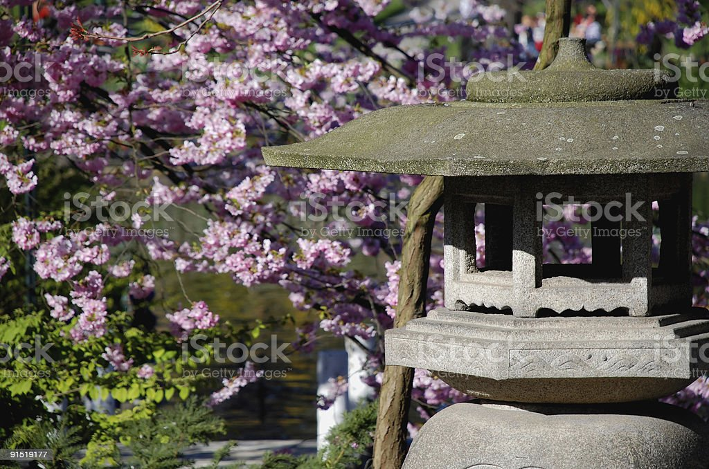 Spring in the oriental garden stock photo