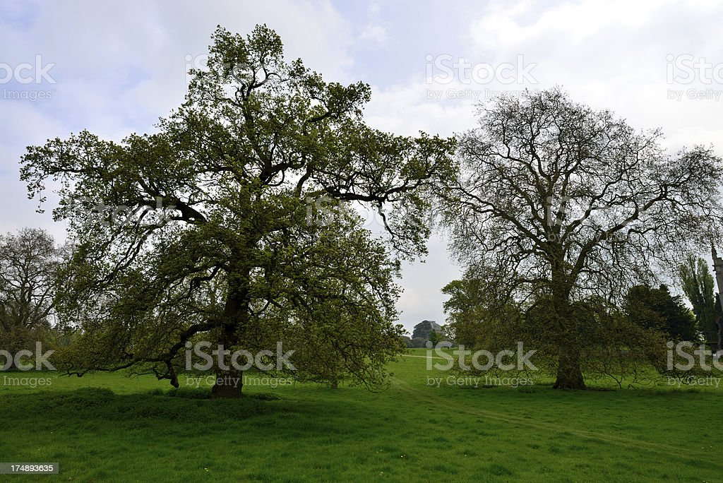 Spring in the park. stock photo