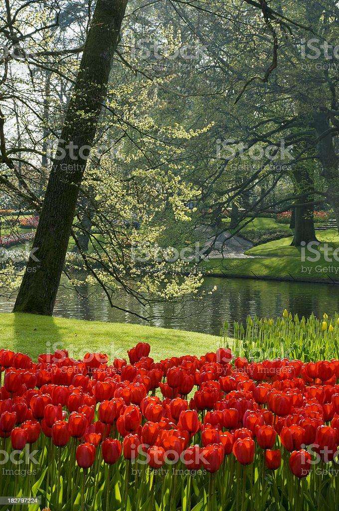 Spring in the Park royalty-free stock photo