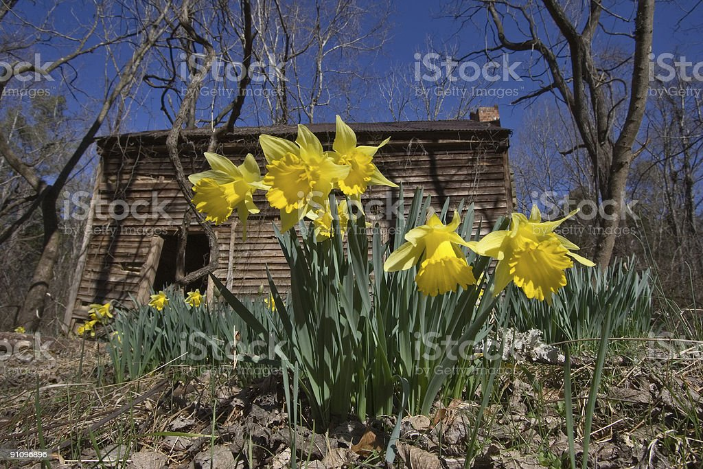 Spring in(to) the woods royalty-free stock photo