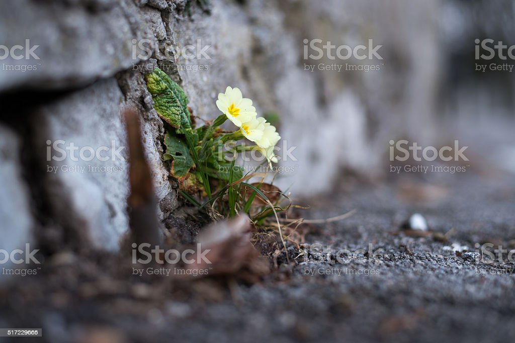 Spring in urban areas stock photo