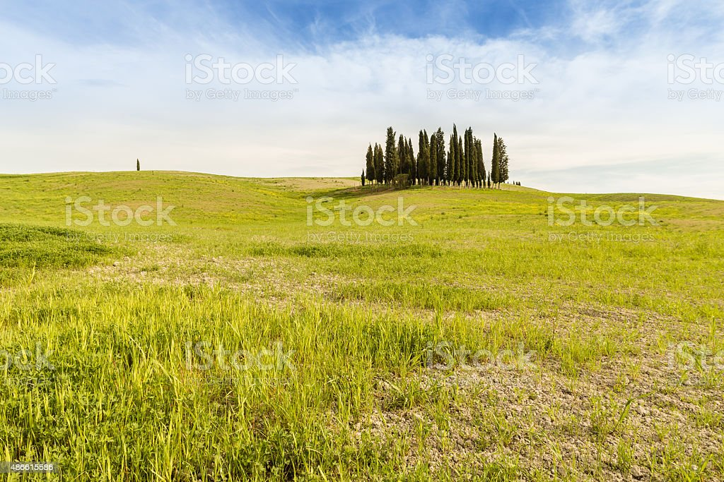 Spring in Val d'Orcia, Cypress grove in a green field stock photo