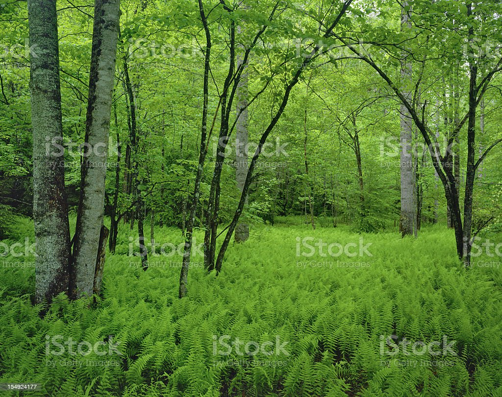 Spring in Vermont royalty-free stock photo
