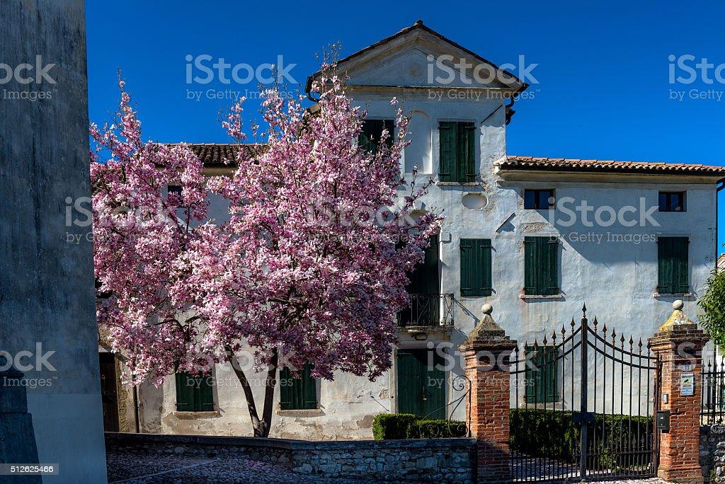 Spring in villa stock photo