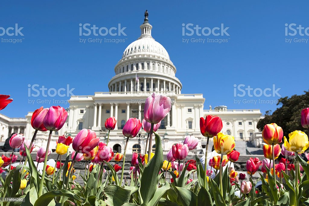 Spring in Washington DC royalty-free stock photo