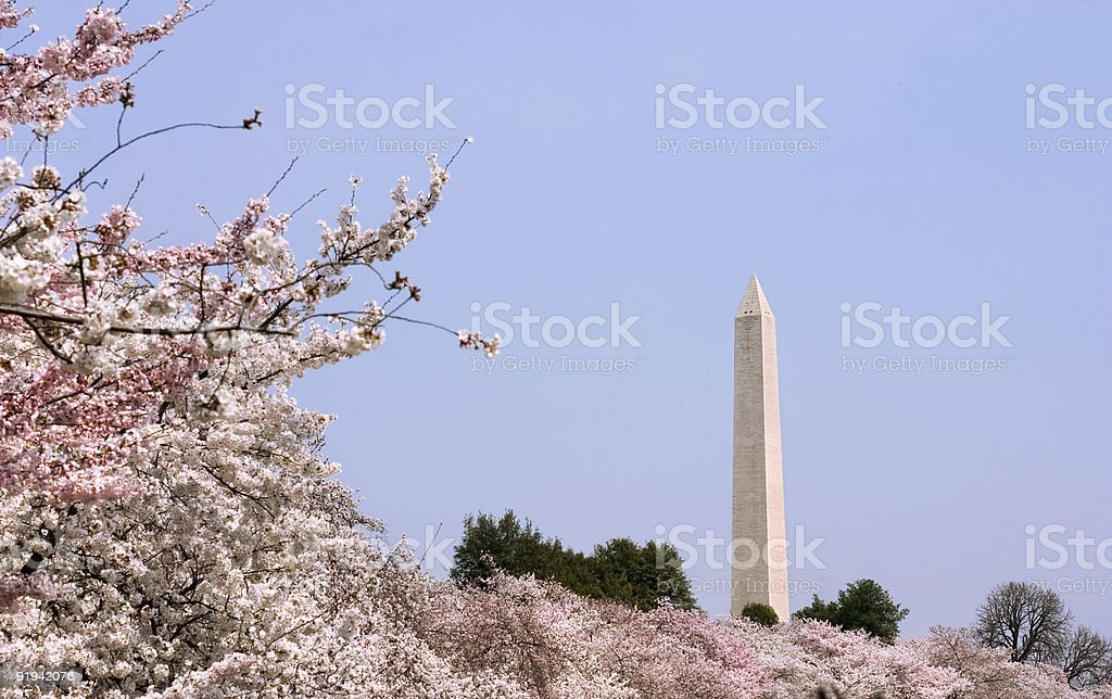 spring in Washington DC stock photo