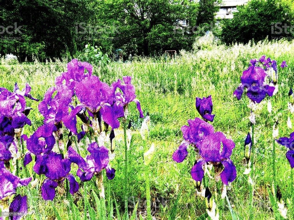 Spring Iris garden- contrasts stock photo