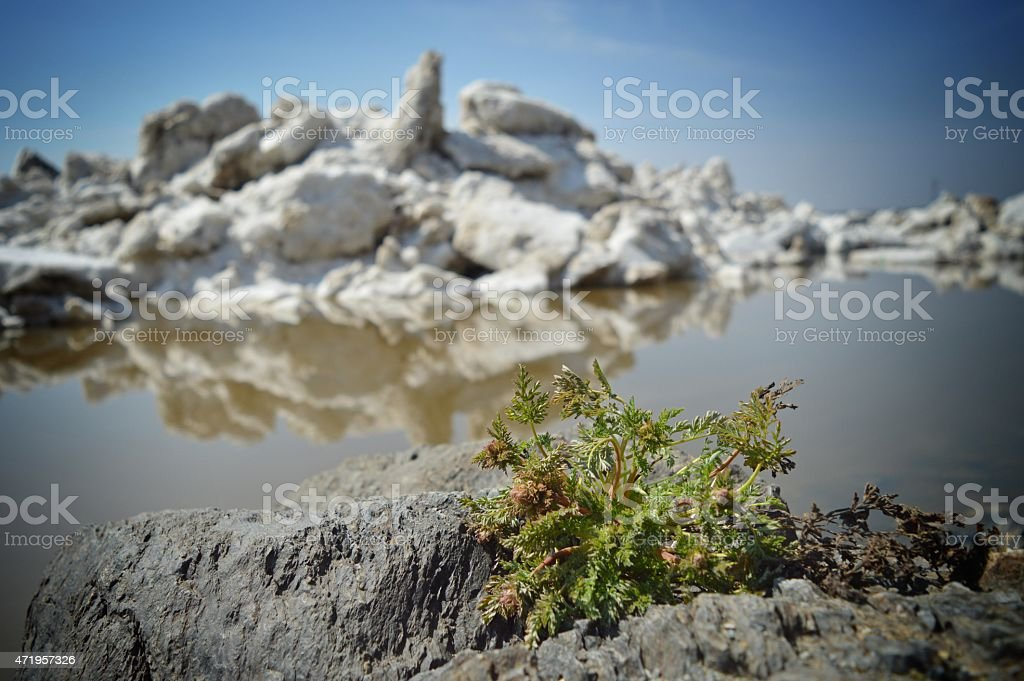 Spring is coming. Spring - the way! stock photo