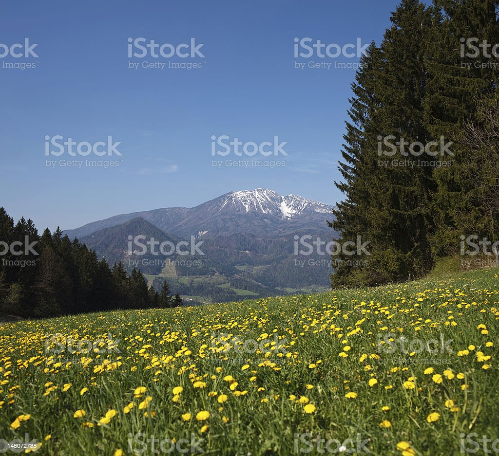 Spring Is Coming To The Mountains stock photo