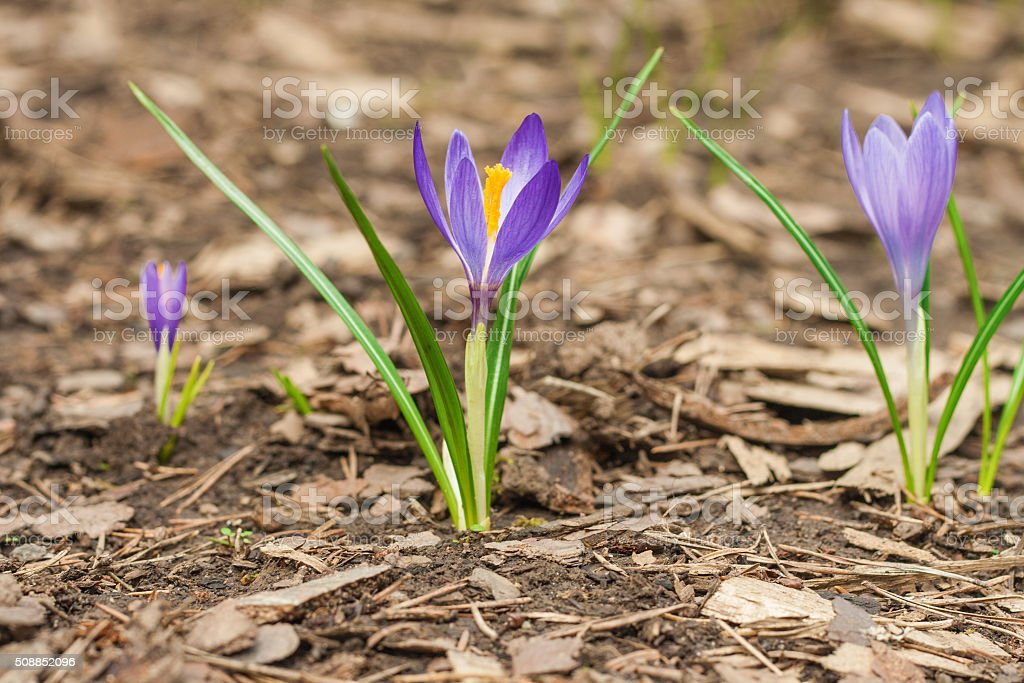 Spring is comming stock photo