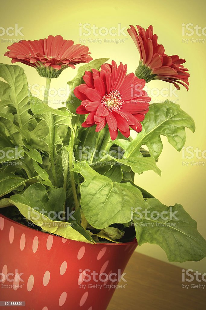 Spring is here! royalty-free stock photo