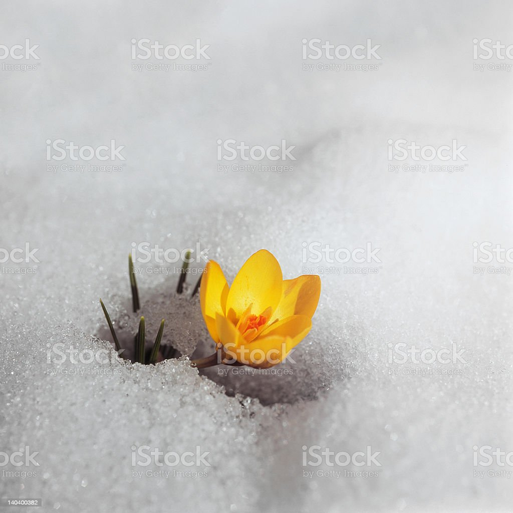 Spring is here!   (Hi-Res) royalty-free stock photo