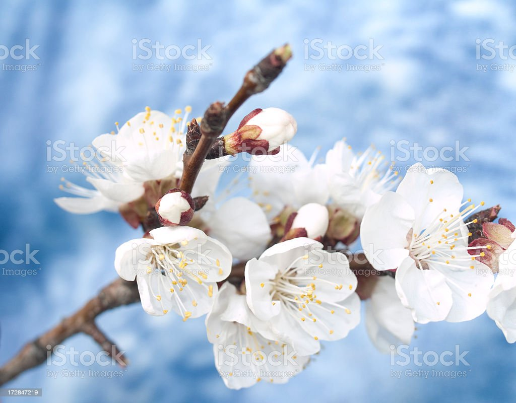 Spring is here! stock photo