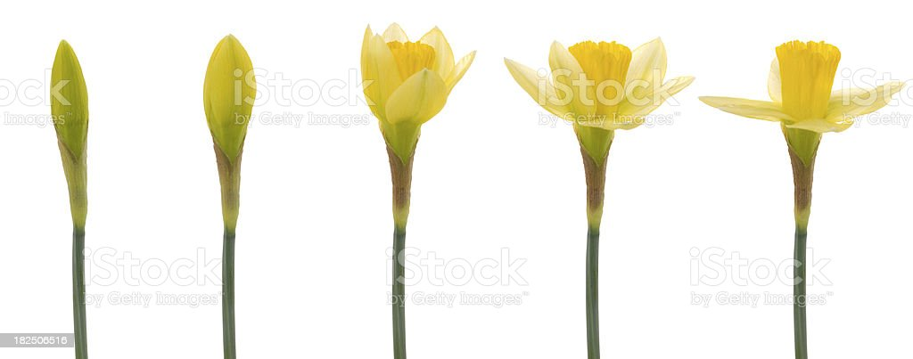Spring is here!!! stock photo