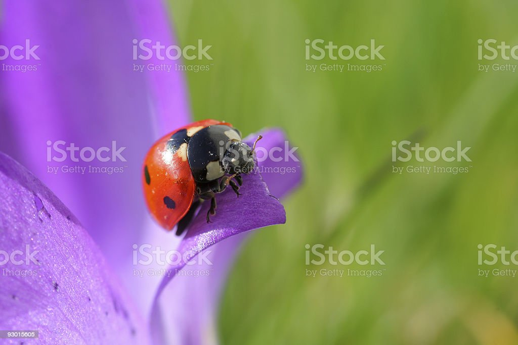 spring is here royalty-free stock photo