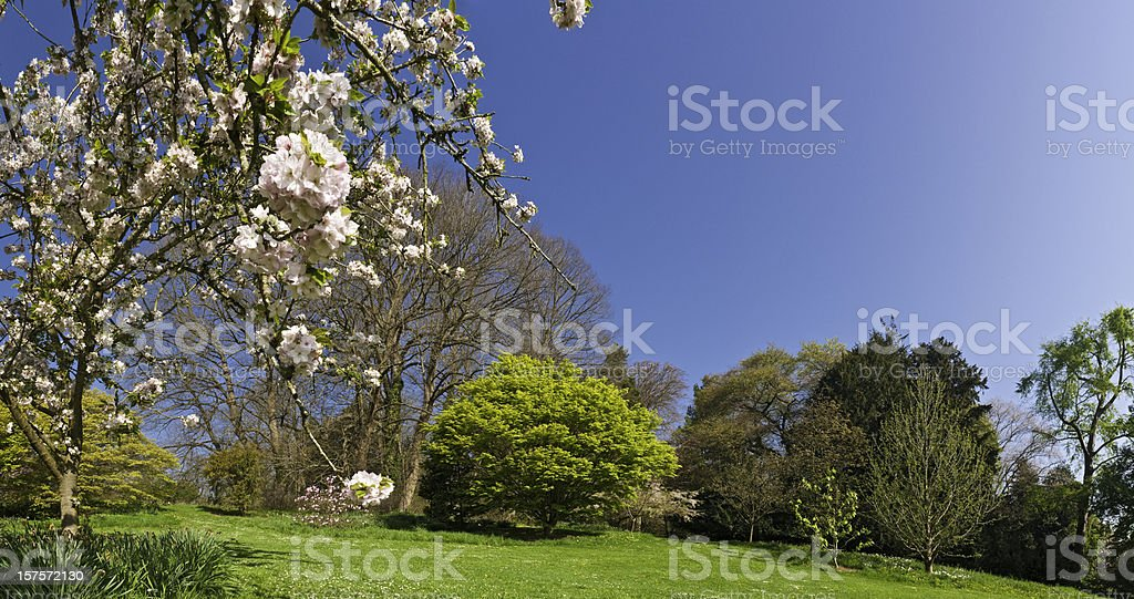 Spring Is Here vibrant green foliage delicate pink blossom flowers royalty-free stock photo