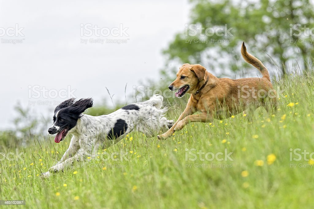 Spring is in the air... stock photo