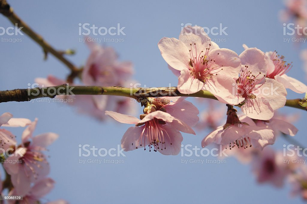 spring is in the air royalty-free stock photo