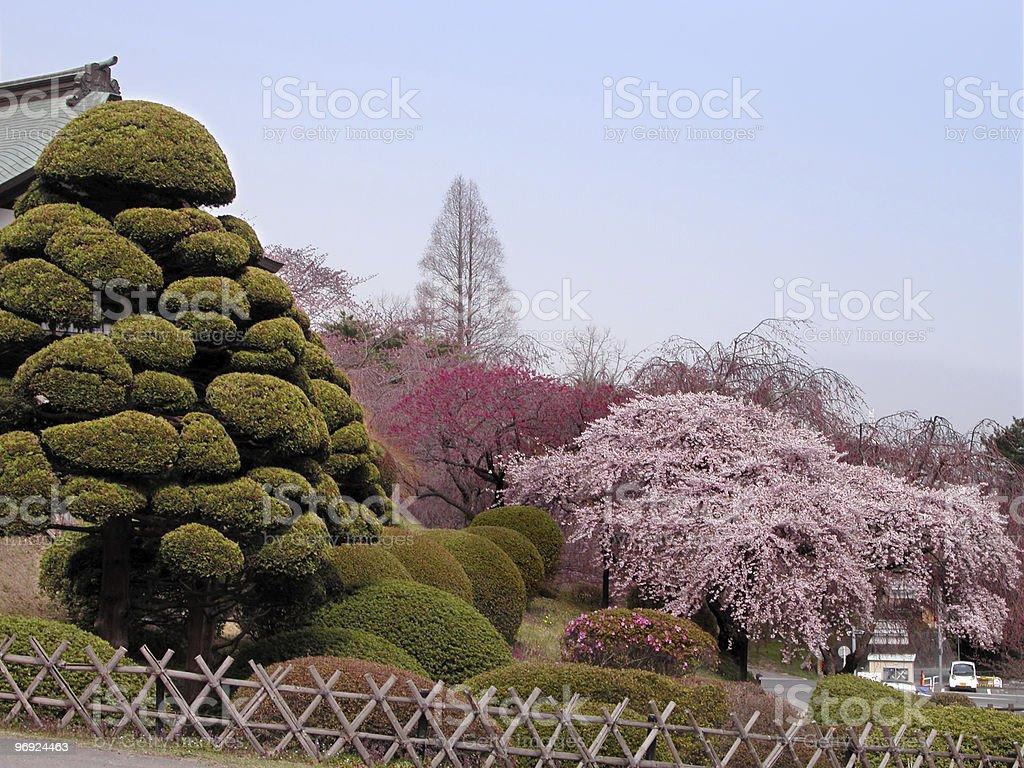 Spring Japanese garden royalty-free stock photo