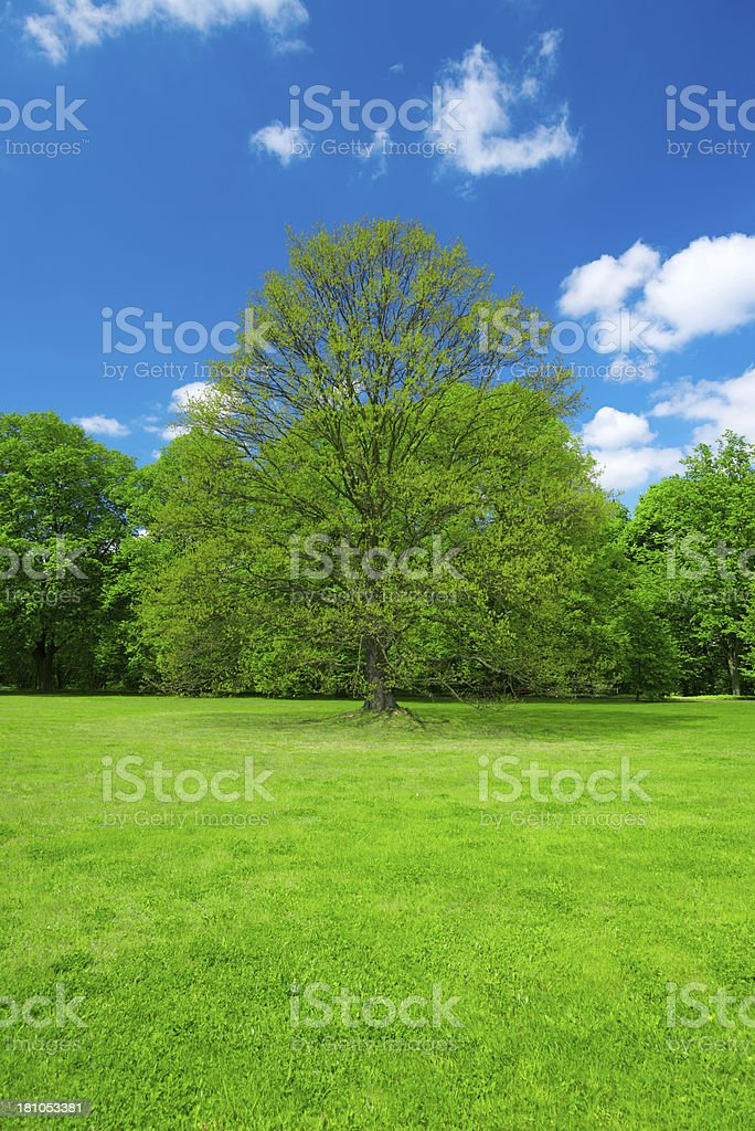 Spring Landscape - 36 Mpx royalty-free stock photo