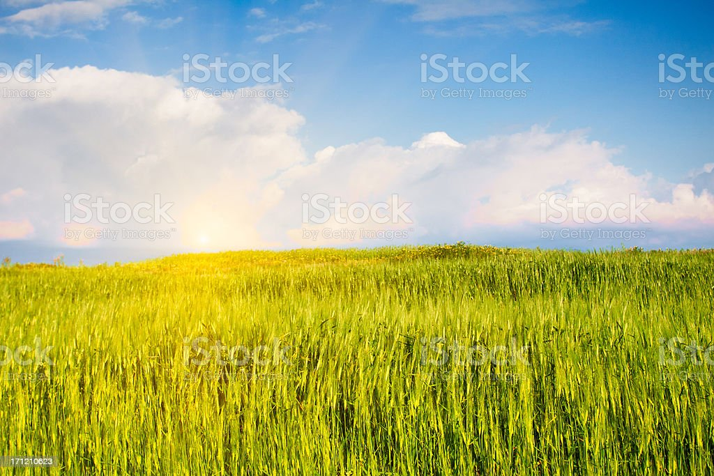Spring Landscape and Canola Fields stock photo