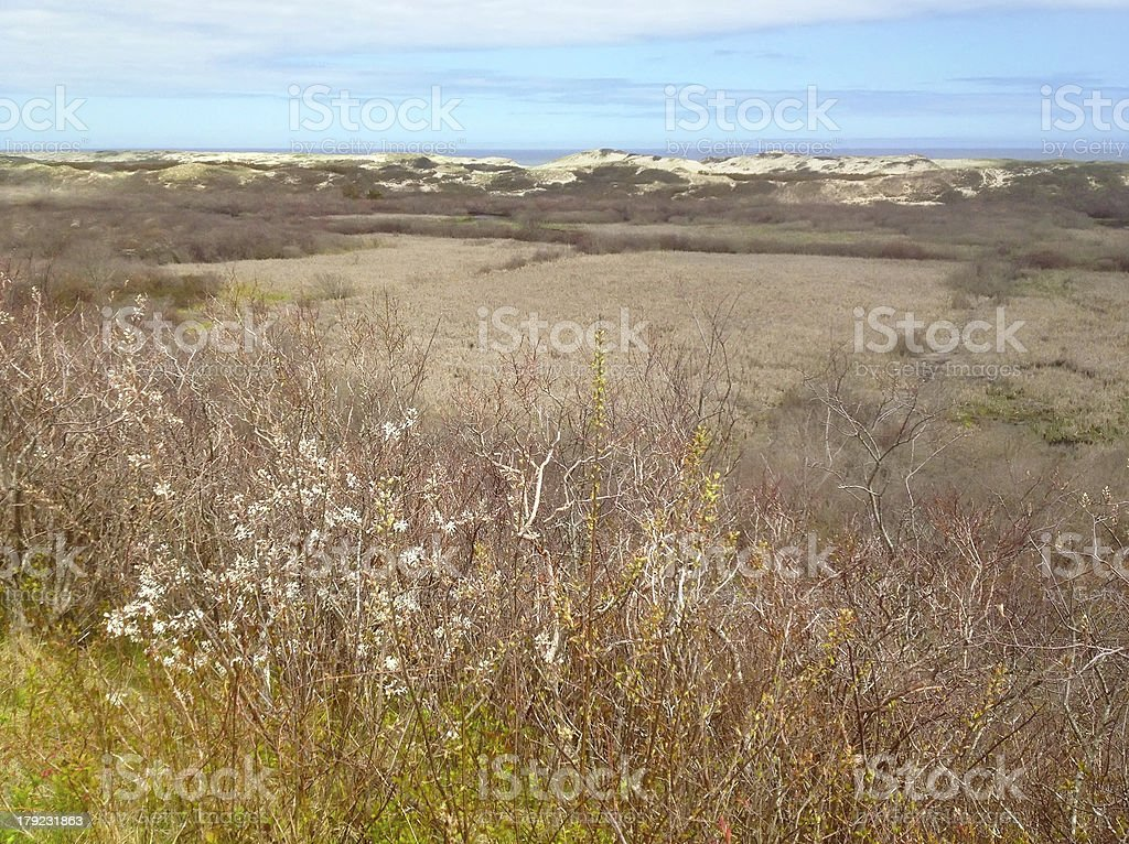Spring landscape at Cape Cod National Seashore stock photo