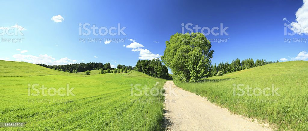Spring Landscape - Dirt road and Green Fields royalty-free stock photo