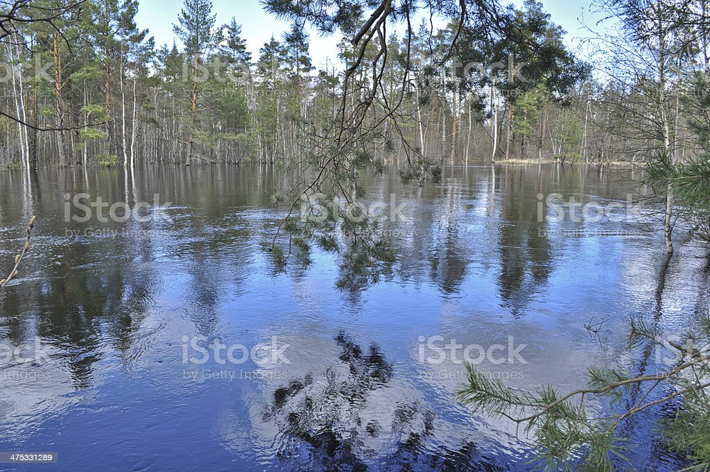 Spring landscape.  Forest and the river. royalty-free stock photo