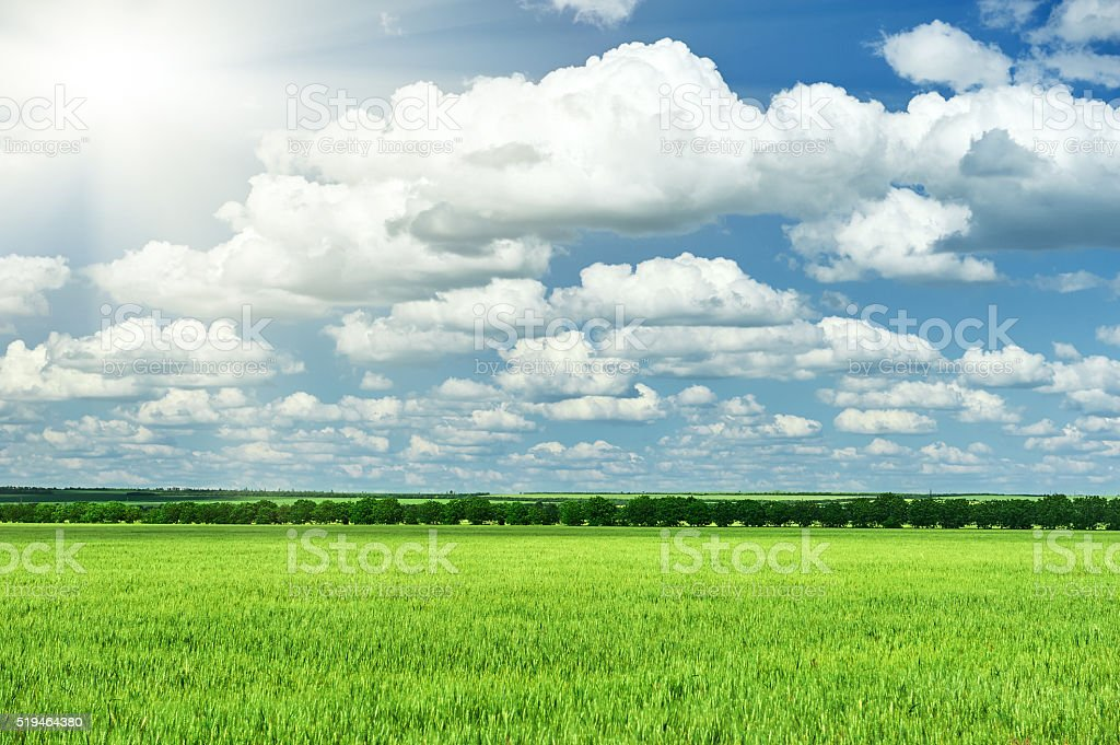 spring landscape, green field and blue cloudy sky stock photo