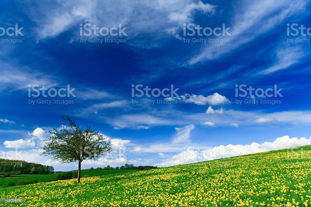 Spring landscape - green fields royalty-free stock photo