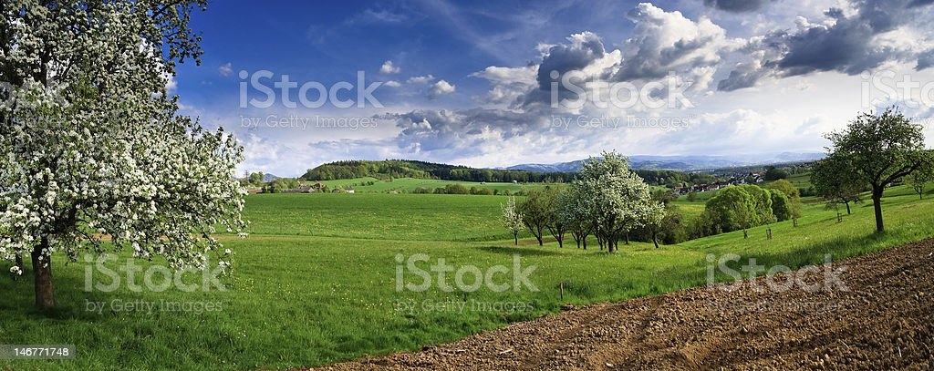 Spring landscape - green fields, the blue sky royalty-free stock photo