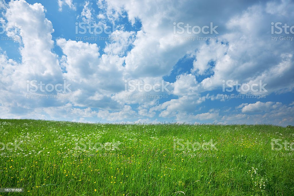 Spring Landscape, Green Grass, Sky and Clouds royalty-free stock photo