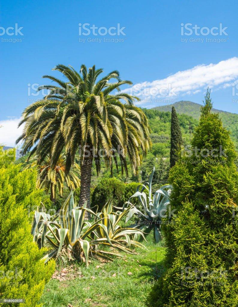 Spring landscape in Abkhazia. stock photo