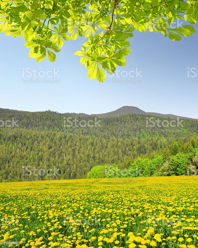 Spring landscape in Bavarian Forest - Germany stock photo