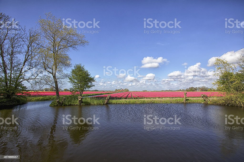 Spring landscape in the Netherlands royalty-free stock photo