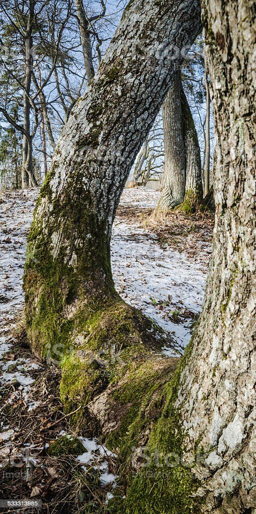 Spring landscape in wood stock photo