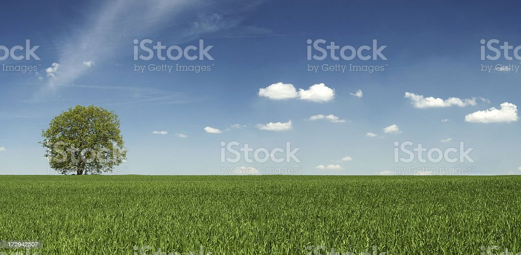 Spring landscape - lonely tree, meadow, the blue sky royalty-free stock photo