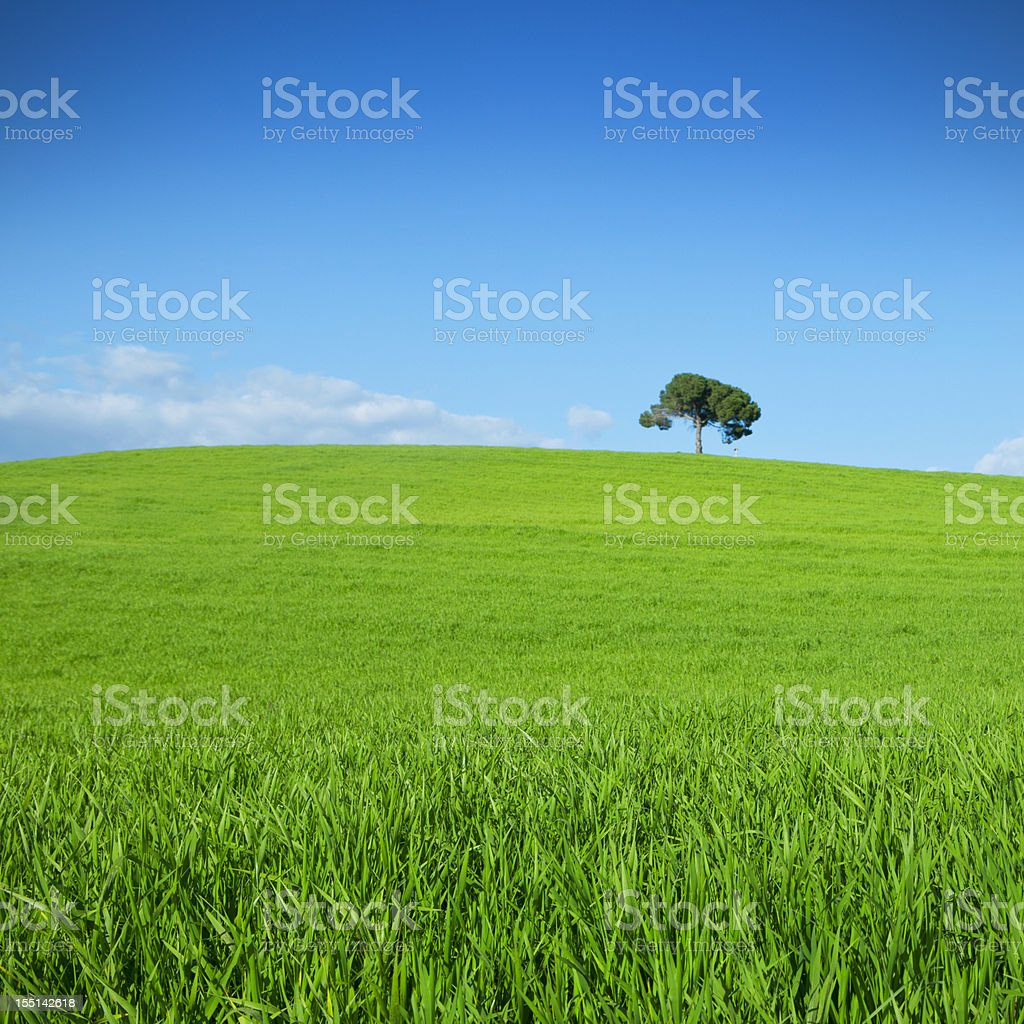 Spring landscape: lonely tree royalty-free stock photo