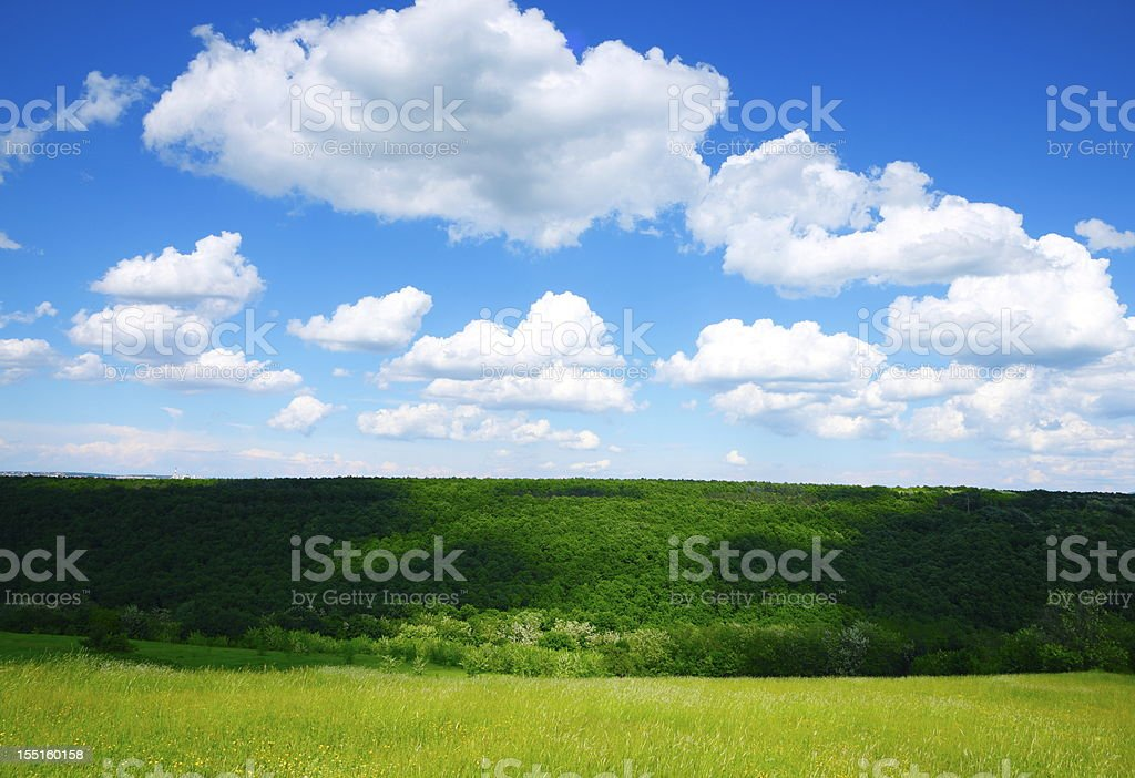 Spring landscape - Meadow royalty-free stock photo