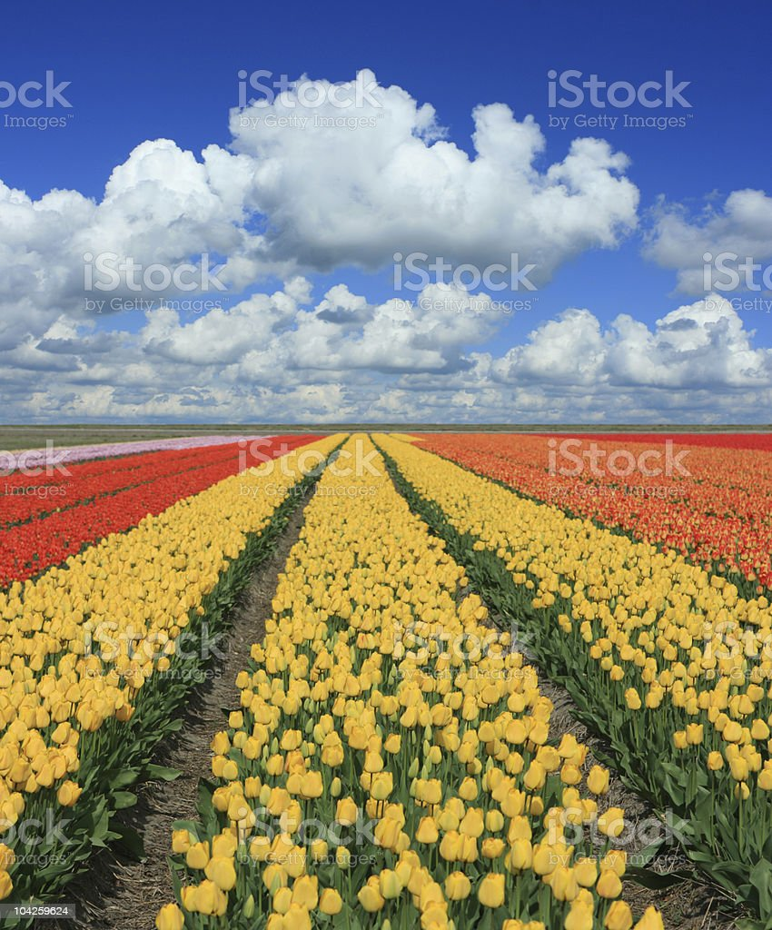 Spring Landscape (XXL) royalty-free stock photo