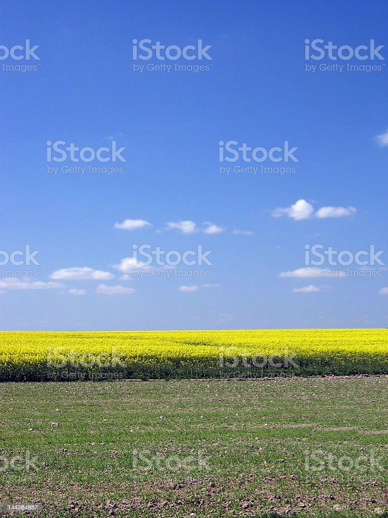 Wiosnę Krajobraz zbiór zdjęć royalty-free