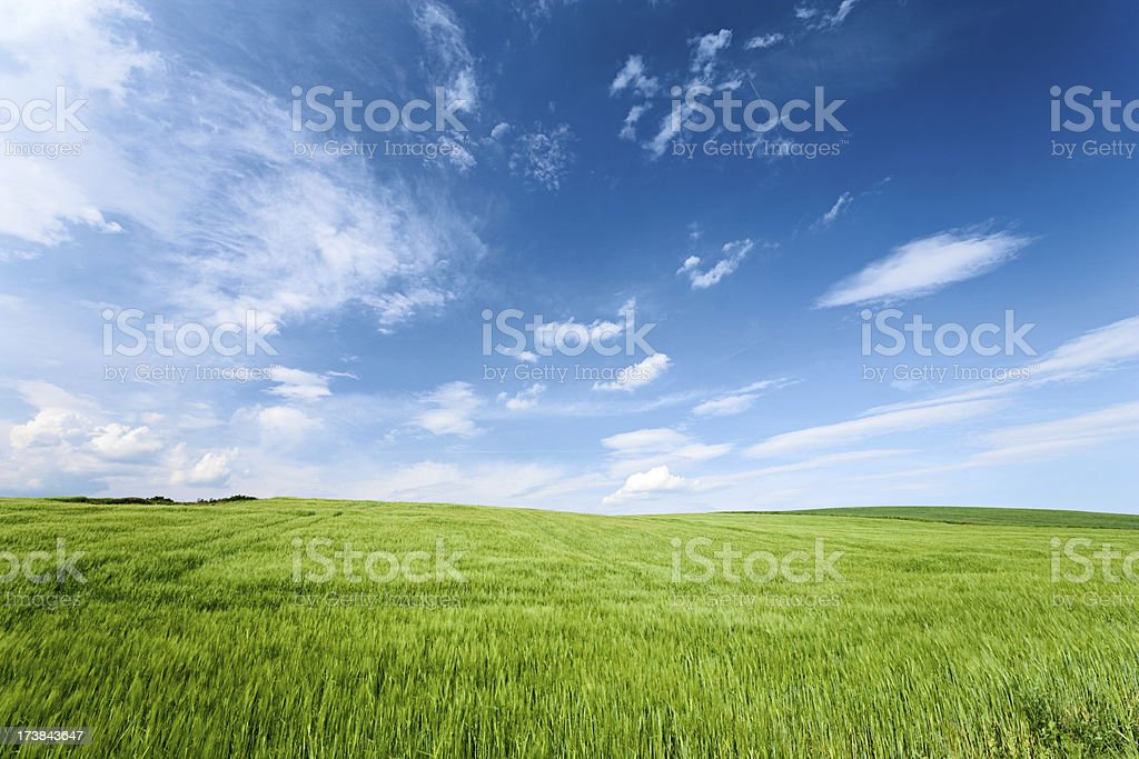 Spring landscape stock photo