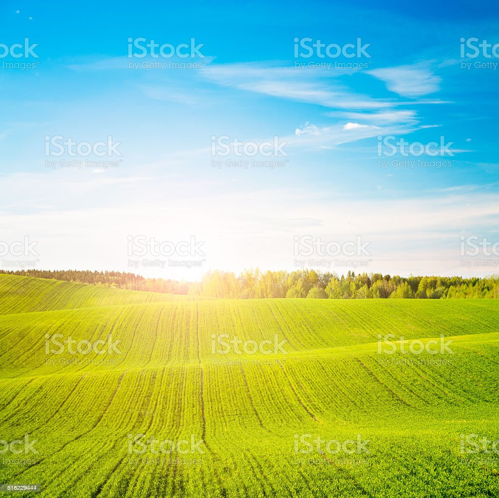 Spring Landscape with Green Field and at Sunset stock photo